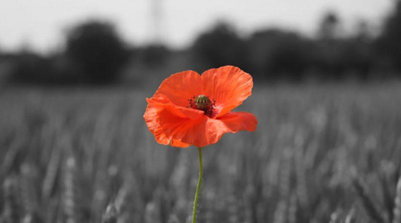Remembrance Sunday – 12th November